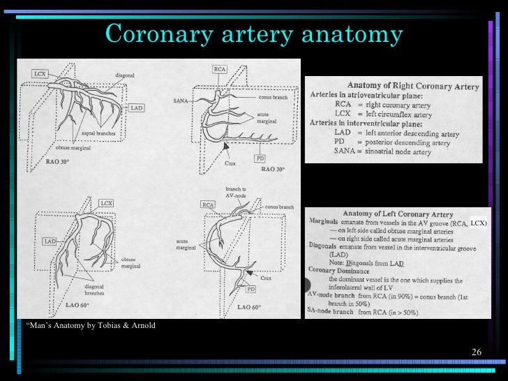 """Coronary artery anatomy                                             LCX)""""Man's Anatomy by Tobias & Arnold                 ..."""