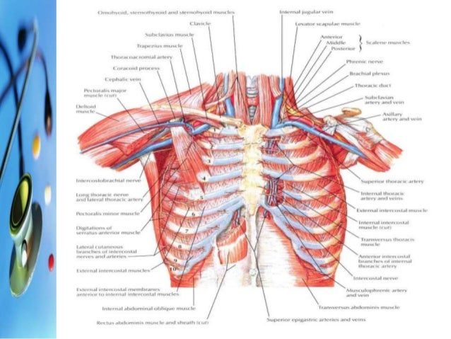Chest trauma thoracic wall 7 ccuart Choice Image