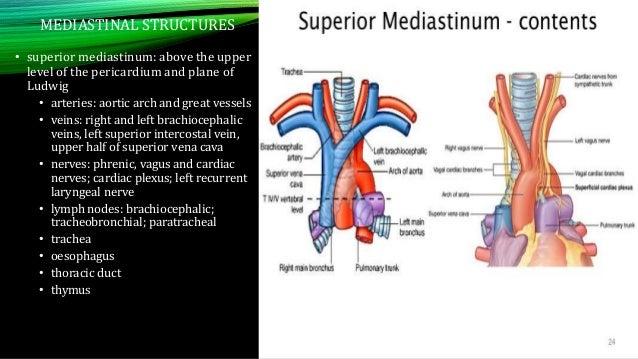Chest XRAY -anatomy Dr.SALBIA XAVIER K