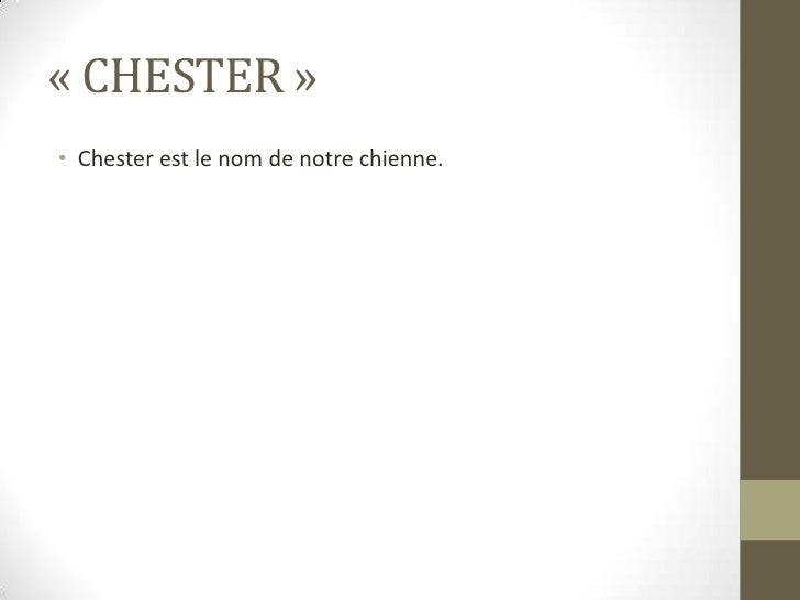 «CHESTER»<br />Chester est le nom de notre chienne.<br />