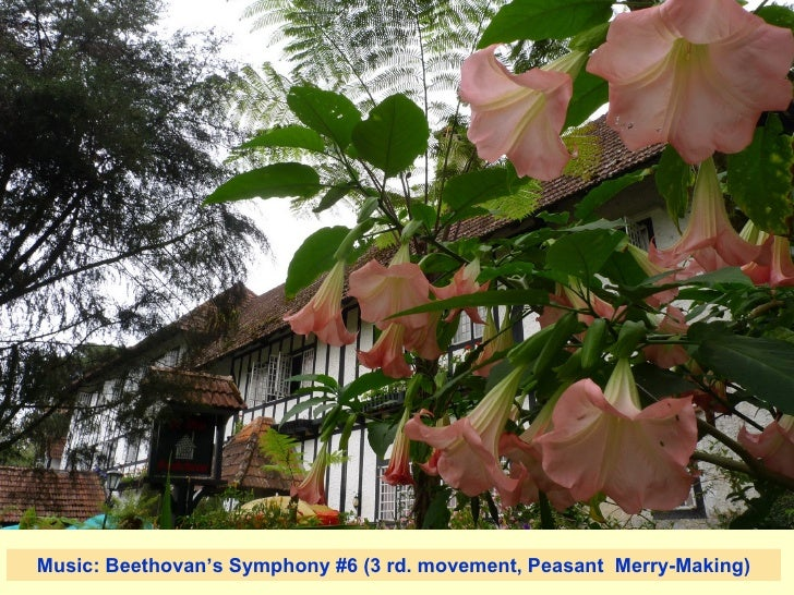 Music: Beethovan's Symphony #6 (3 rd. movement, Peasant  Merry-Making)