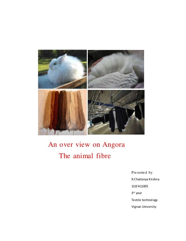 An over view on Angora The animal fibre Presented by R.Chaitanya Krishna 131FA11005 3rd year Textile technology Vignan Uni...