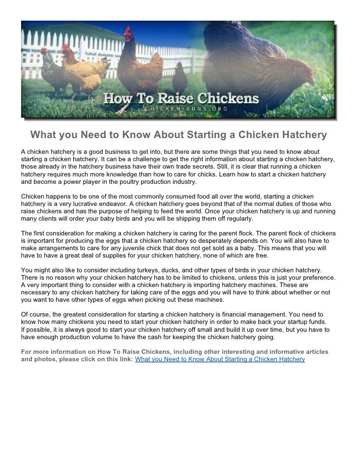 What you Need to Know About Starting a Chicken Hatchery