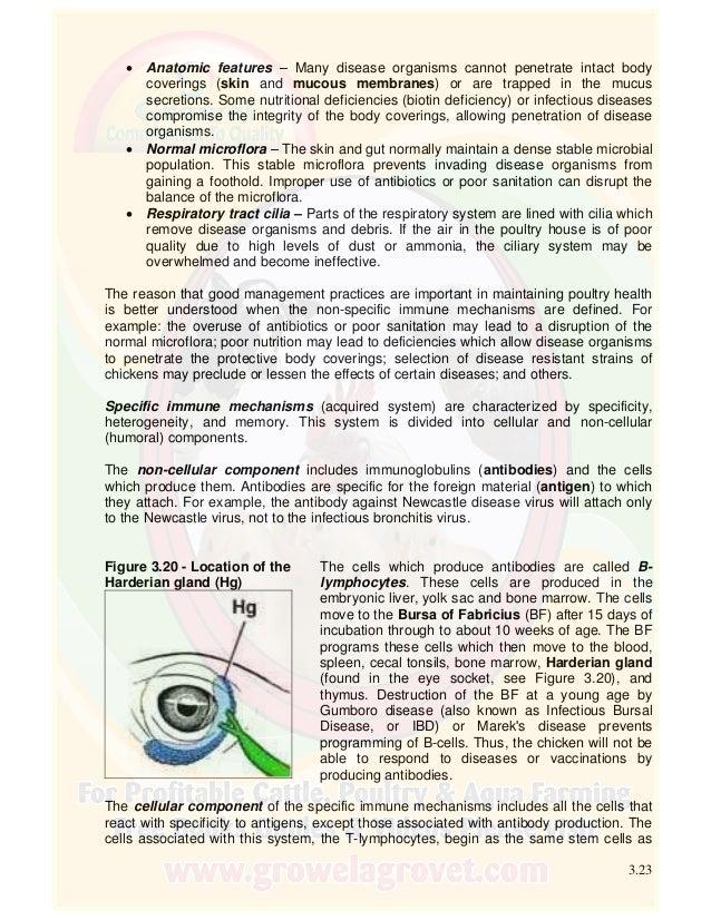 Único Poultry Anatomy And Physiology Componente - Anatomía de Las ...