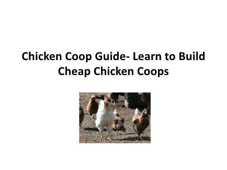 Chicken Coop Guide- Learn to Build Cheap Chicken Coops<br />