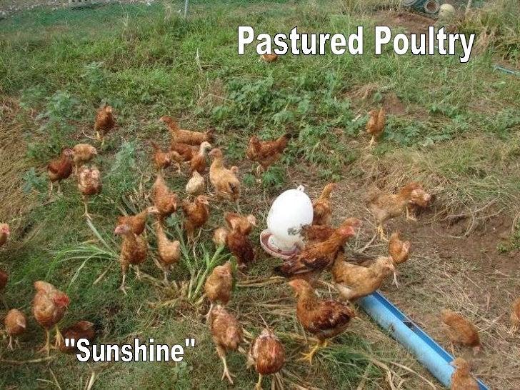 """Sunshine"" Pastured Poultry"