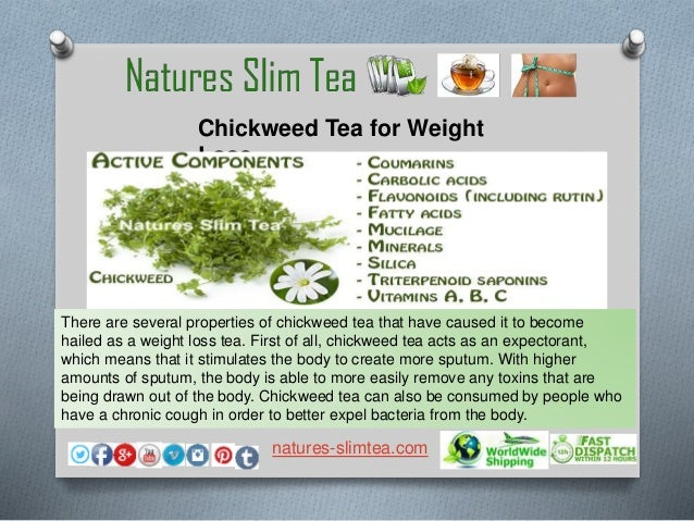 chickweed for weight loss benefits