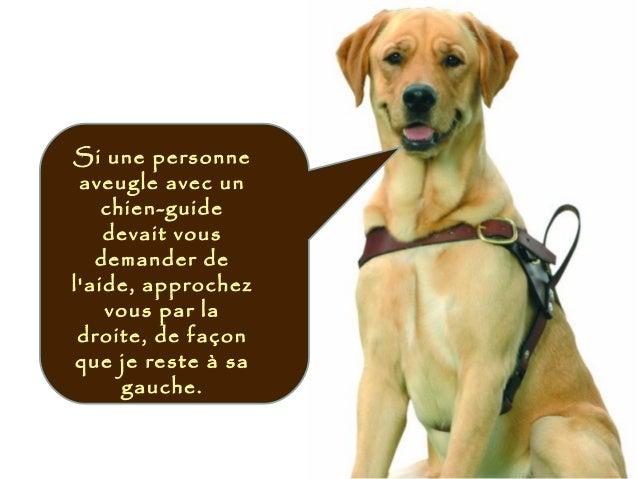 Si une personne aveugle avec un chien-guide devait vous demander de l'aide, approchez vous par la droite, de façon que je ...