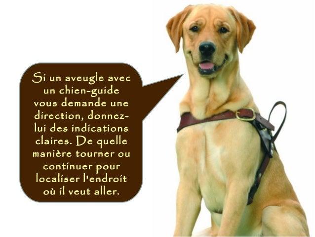 Si un aveugle avec un chien-guide vous demande une direction, donnez- lui des indications claires. De quelle manière tourn...
