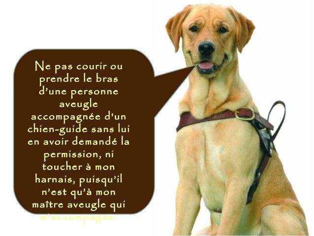 Ne pas courir ou prendre le bras d'une personne aveugle accompagnée d'un chien-guide sans lui en avoir demandé la permissi...