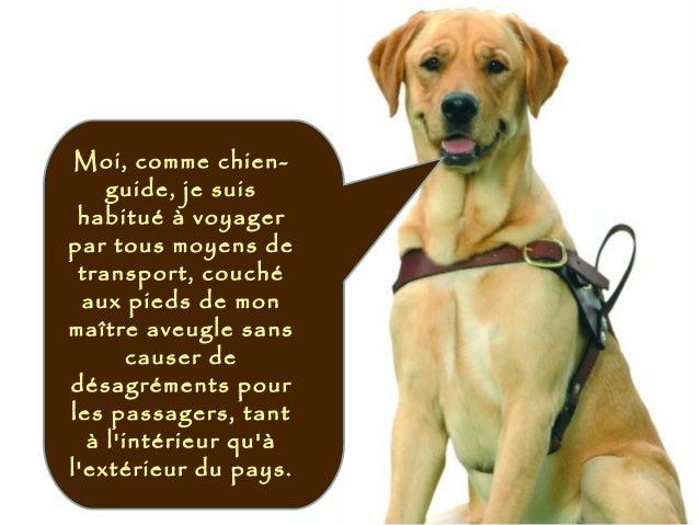 Moi, comme chien- guide, je suis habitué à voyager par tous moyens de transport, couché aux pieds de mon maître aveugle sa...