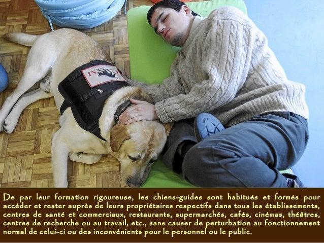 De par leur formation rigoureuse, les chiens-guides sont habitués et formés pour accéder et rester auprès de leurs proprié...