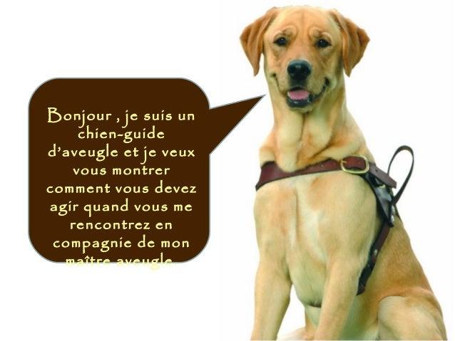 Bonjour , je suis un chien-guide d'aveugle et je veux vous montrer comment vous devez agir quand vous me rencontrez en com...