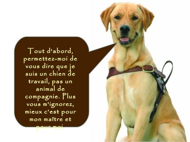 Tout d'abord, permettez-moi de vous dire que je suis un chien de travail, pas un animal de compagnie. Plus vous m'ignorez,...