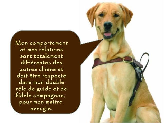 Mon comportement et mes relations sont totalement différentes des autres chiens et doit être respecté dans mon double rôle...