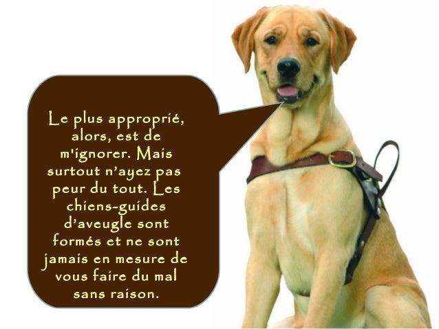 Le plus approprié, alors, est de m'ignorer. Mais surtout n'ayez pas peur du tout. Les chiens-guides d'aveugle sont formés ...