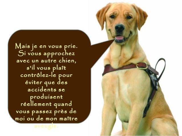 Mais je en vous prie. Si vous approchez avec un autre chien, s'il vous plaît contrôlez-le pour éviter que des accidents se...