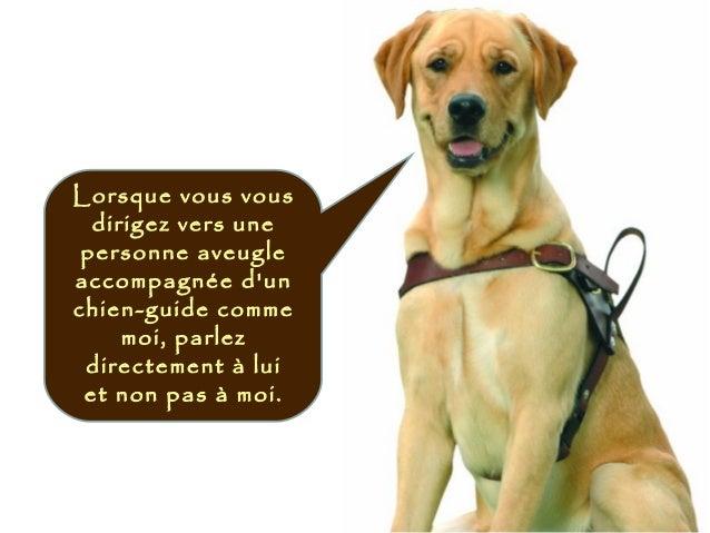 Lorsque vous vous dirigez vers une personne aveugle accompagnée d'un chien-guide comme moi, parlez directement à lui et no...