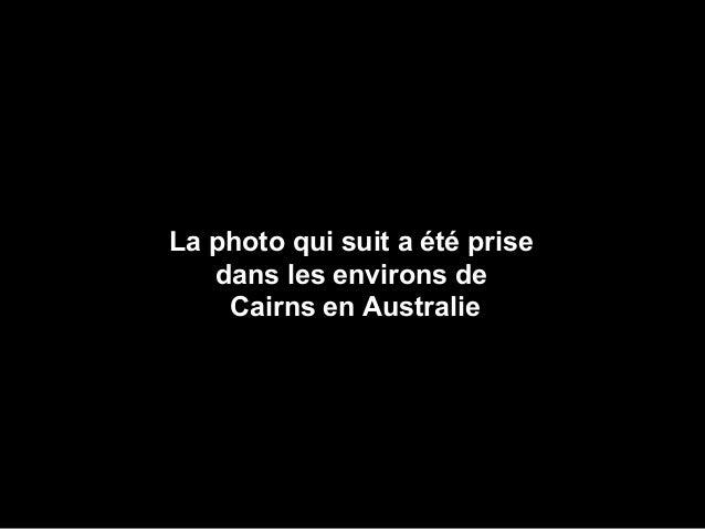 La photo qui suit a été prise dans les environs de Cairns en Australie