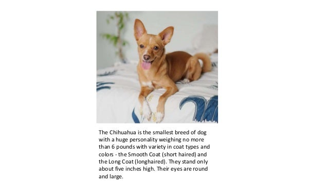 10+ Cutest Gifts for Chihuahua Lovers Slide 2