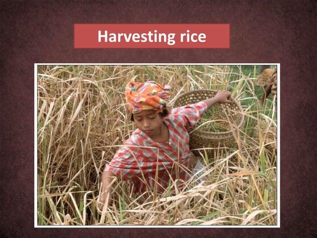 Poverty and Hazardous Child Labour: A Vicious Circle
