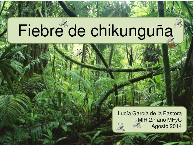 Fiebre de chikunguña  Lucía García de la Pastora  MIR 2.º año MFyC  Agosto 2014