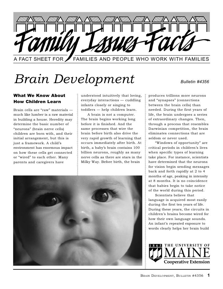 A FACT SHEET FOR                     FAMILIES AND PEOPLE WHO WORK WITH FAMILIESBrain Development                          ...