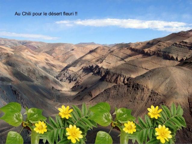 Au Chili pour le désert fleuri !!