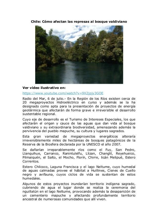 Chile: Cómo afectan las represas al bosque valdiviano Ver video ilustrativo en: https://www.youtube.com/watch?v=9X2jpjy3GO...