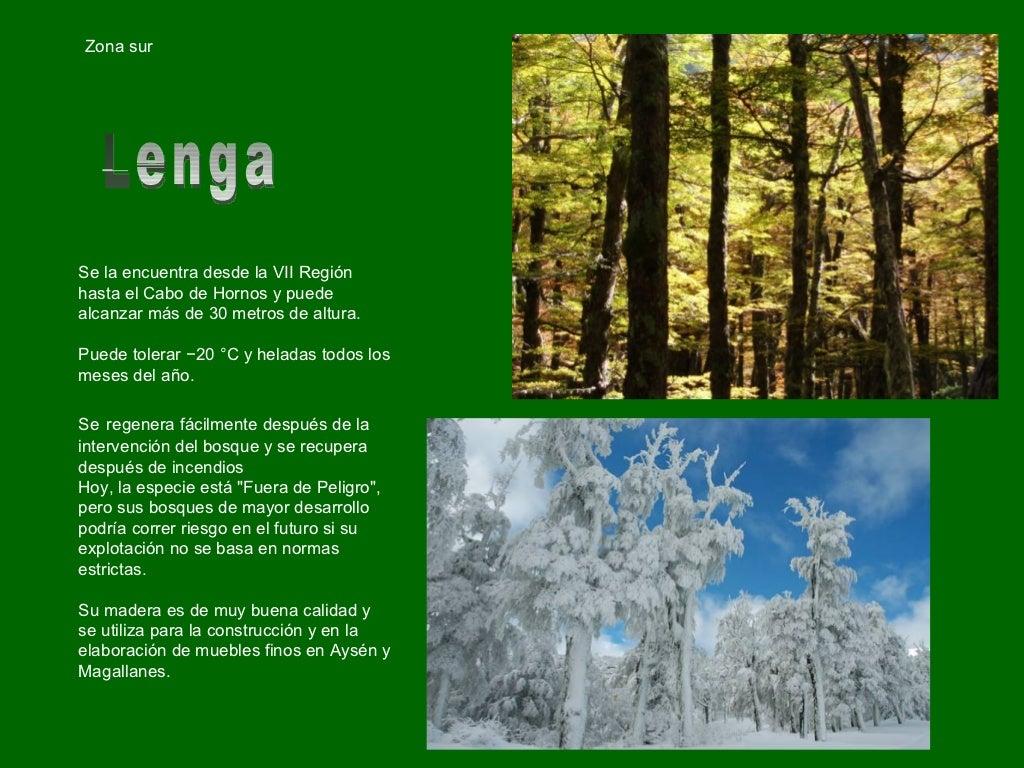 Chile arboles nativos for Viveros zona sur