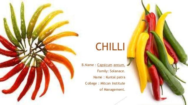 CHILLI B.Name : Capsicum annum. Family: Solanace. Name : Kuntal patra College : Mitcon Institute of Management.