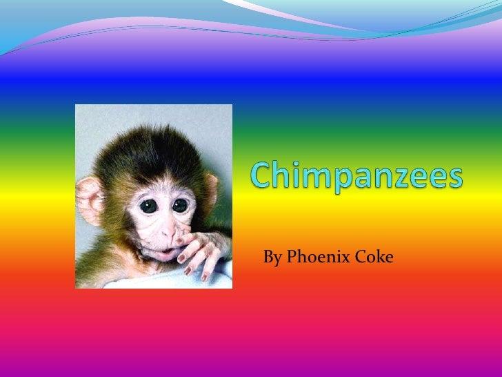 Chimpanzees  <br />By Phoenix Coke<br />