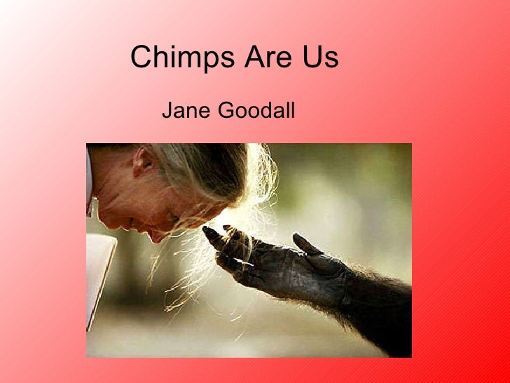Chimps Are Us Jane Goodall