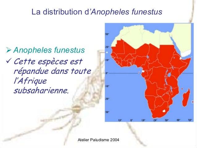 anopheles funestus - photo #37