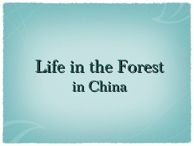 Life in the ForestLife in the Forest in Chinain China