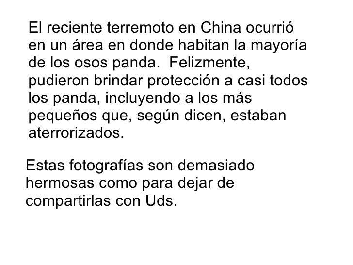 El reciente terremoto en China ocurrió en un área en donde habitan la mayoría de los osos panda.  Felizmente, pudieron bri...