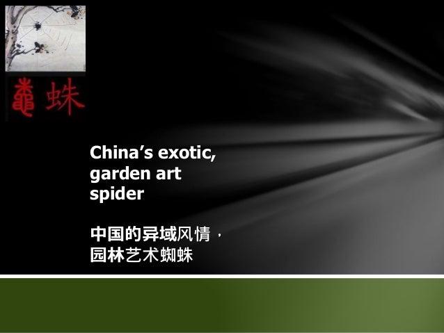 China's exotic, garden art spider 中国的异域风情, 园林艺术蜘蛛