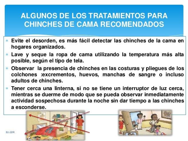 Chinche de cama cimex lectularius 3 for Como eliminar chinches de cama