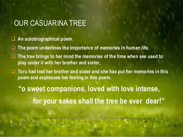 our causarina tree The casuarina tree is a collection of short stories set in the federated malay states during the 1920s by w somerset maugham it was first published by the uk .