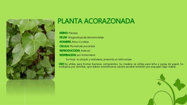 Singonio reproduccion asexual de las plantas