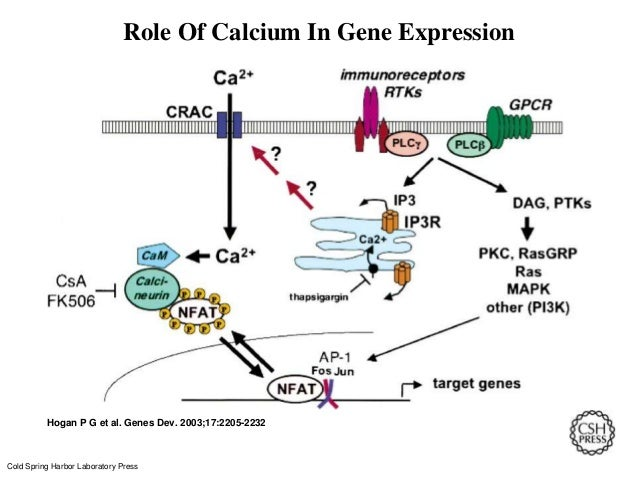 what is the role of atp in coupling the cells anabolic and catabolic processes