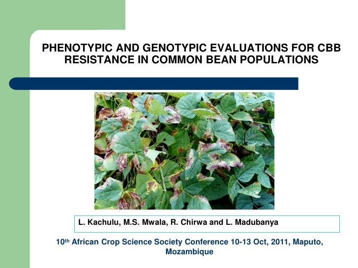 PHENOTYPIC AND GENOTYPIC EVALUATIONS FOR CBB   RESISTANCE IN COMMON BEAN POPULATIONS       L. Kachulu, M.S. Mwala, R. Chir...