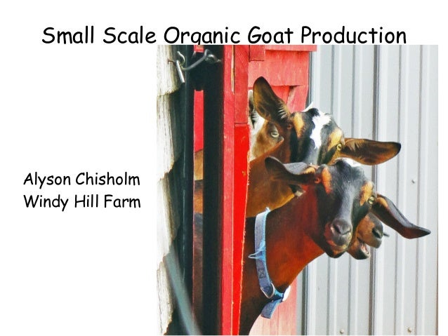 Small Scale Organic Goat Production  Alyson Chisholm Windy Hill Farm