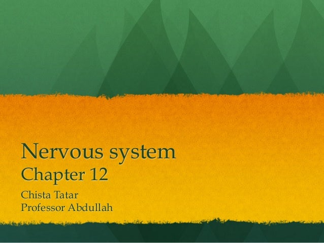 Nervous system Chapter 12 Chista Tatar Professor Abdullah
