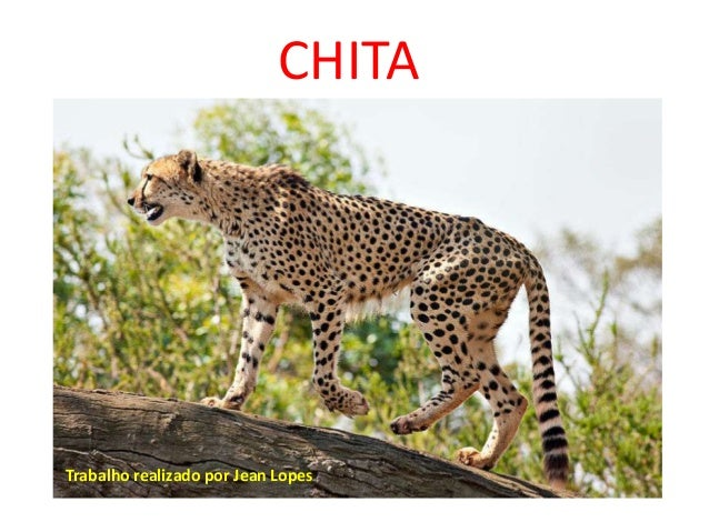 CHITATrabalho realizado por Jean Lopes
