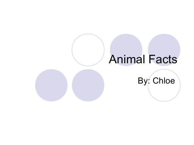 Animal Facts     By: Chloe