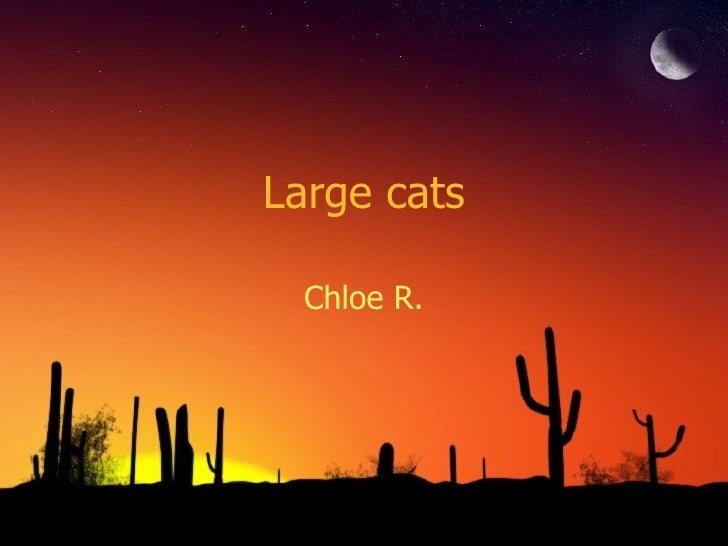 Large cats Chloe R.