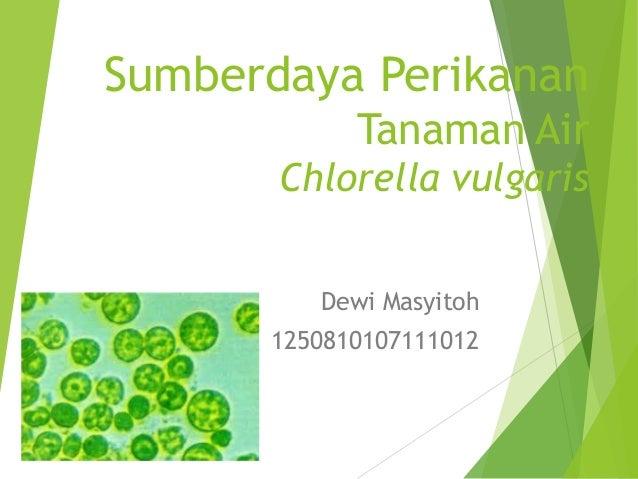 Sumberdaya Perikanan Tanaman Air Chlorella vulgaris Dewi Masyitoh 1250810107111012