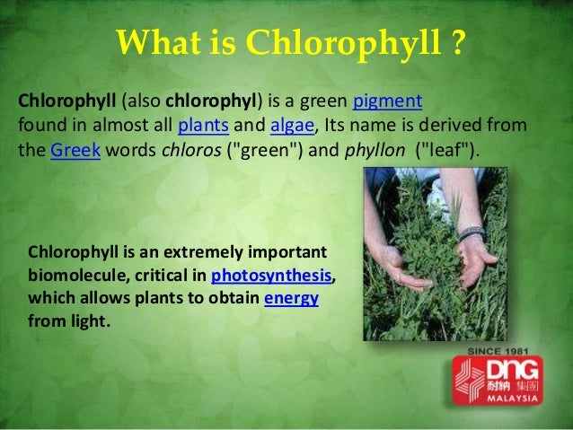 chlorophyll plus guarana - presentation, Skeleton