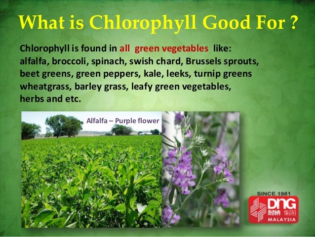Chlorophyll is good for